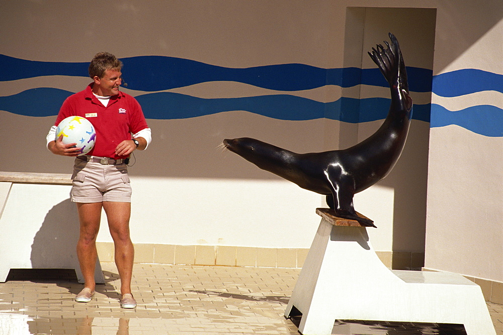 Performing seal with trainer, Ocean World, Fort Lauderdale, Florida, United States of America, North America