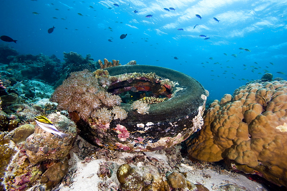 Coral encrusted tyre at Nalusuan Marine Sanctuary, Cebu, Philippines, Southeast Asia, Asia