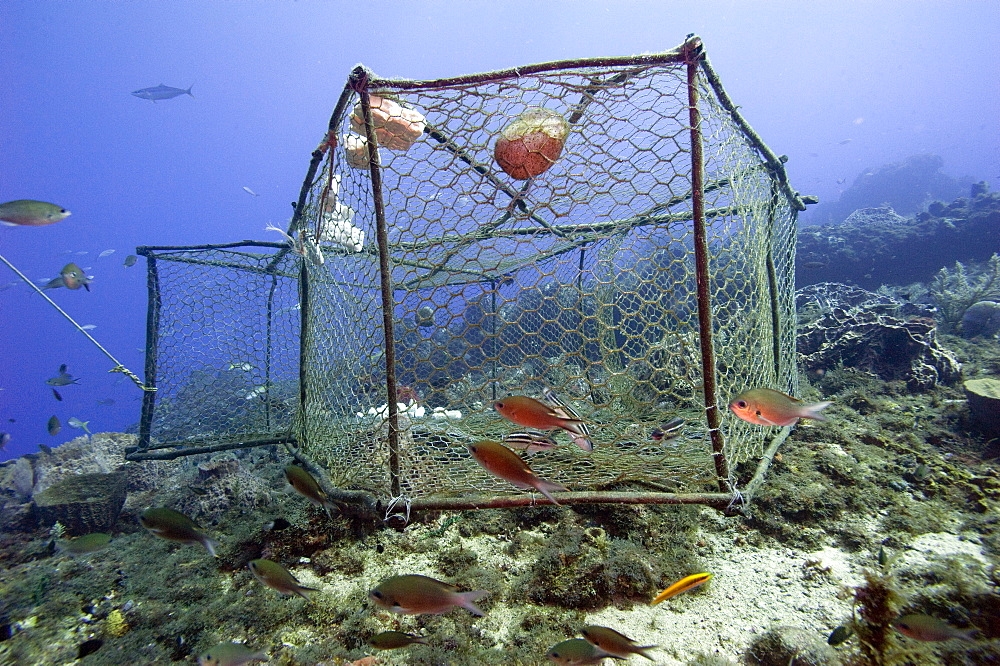 Fishing cage in Dominica, West Indies, Caribbean, Central America - 1103-368