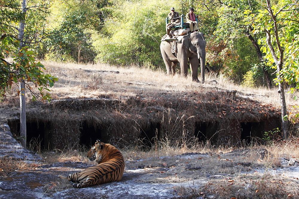 Bengal tiger, Panthera tigris tigris, Bandhavgarh National Park, Madhya Pradesh, India - 1106-17