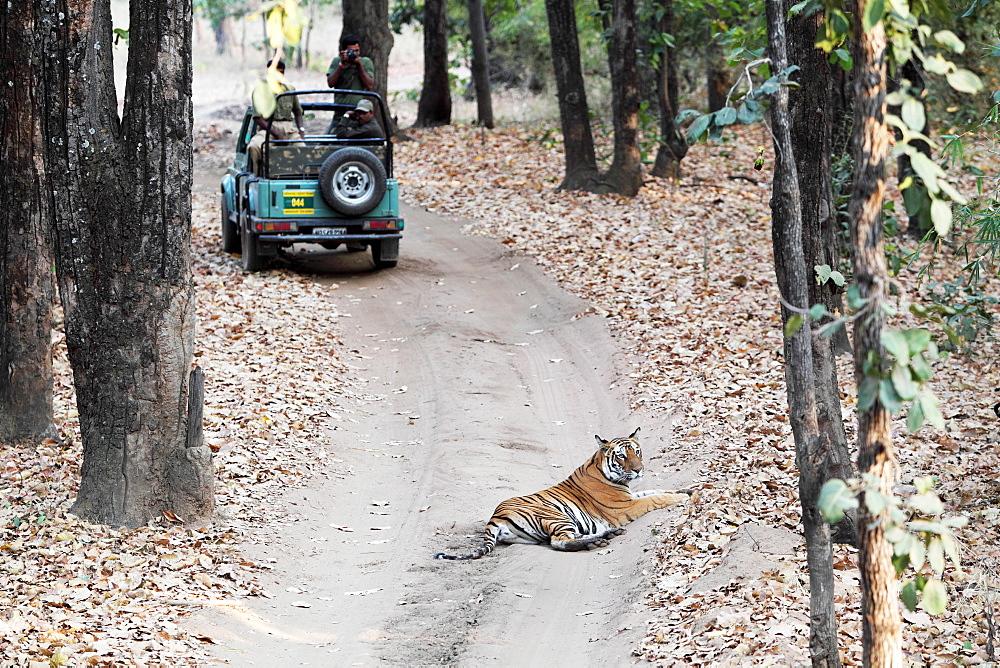 Wild Bengal tiger (Panthera tigris tigris), Bandhavgarh Tiger Reserve, Madhya Pradesh, India, Asia - 1106-26