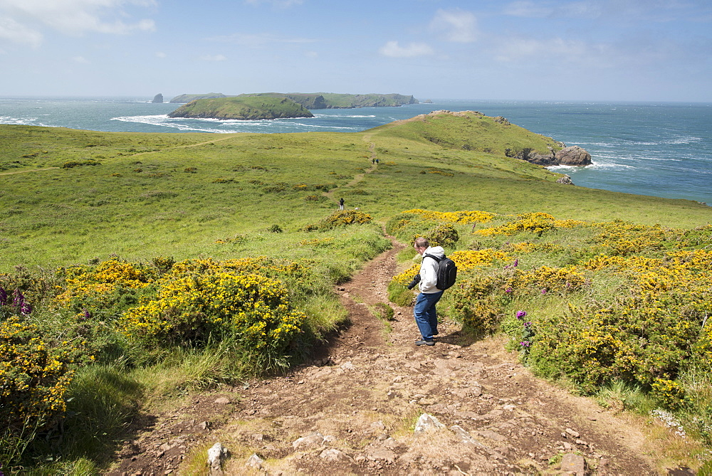 Deer Park and Skomer Island, Marloes Peninsula, Pembrokeshire, Wales, United Kingdom, Europe  - 1108-23