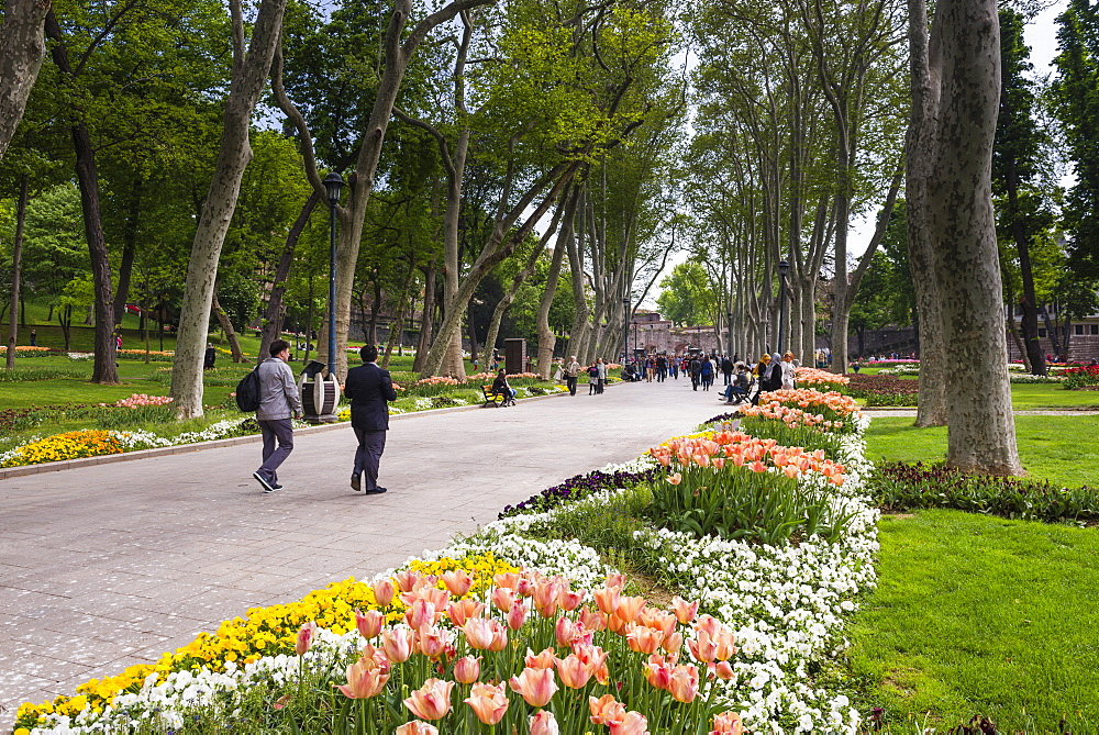 Tulips in Gulhane Park (Rosehouse Park), Istanbul, Turkey, Europe