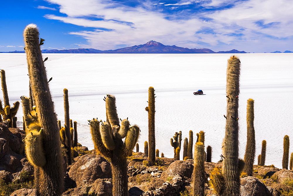 Cactus covered Fish Island (Isla Incahuasi) (Inka Wasi), Uyuni Salt Flats (Salar de Uyuni), Uyuni, Bolivia, South America