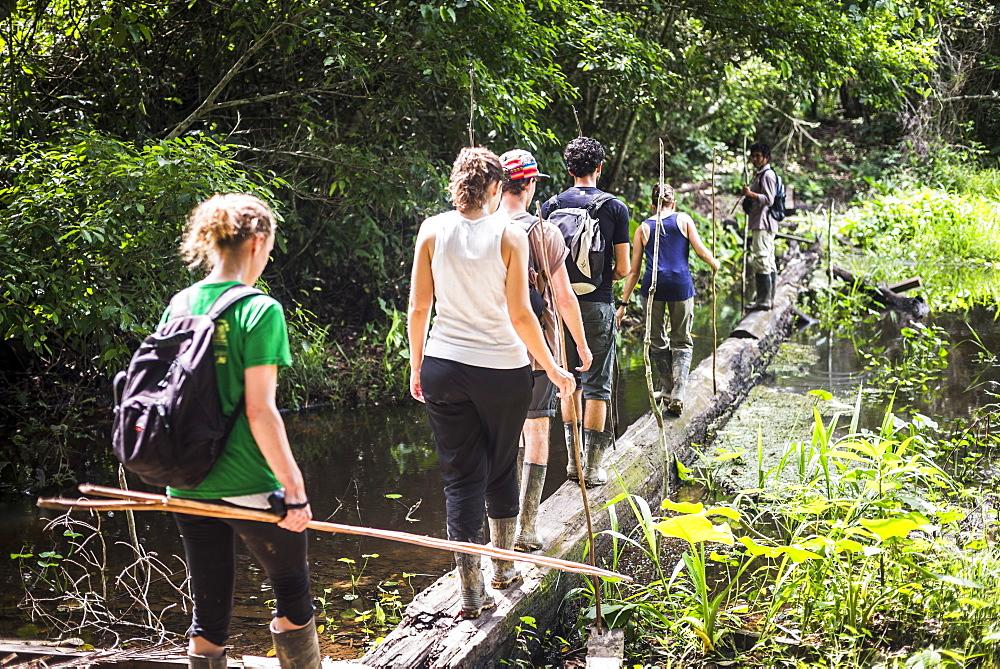 Amazon Jungle walk in Puerto Maldonado area at Tambopata National Reserve, Tambopata Province, Peru, South America