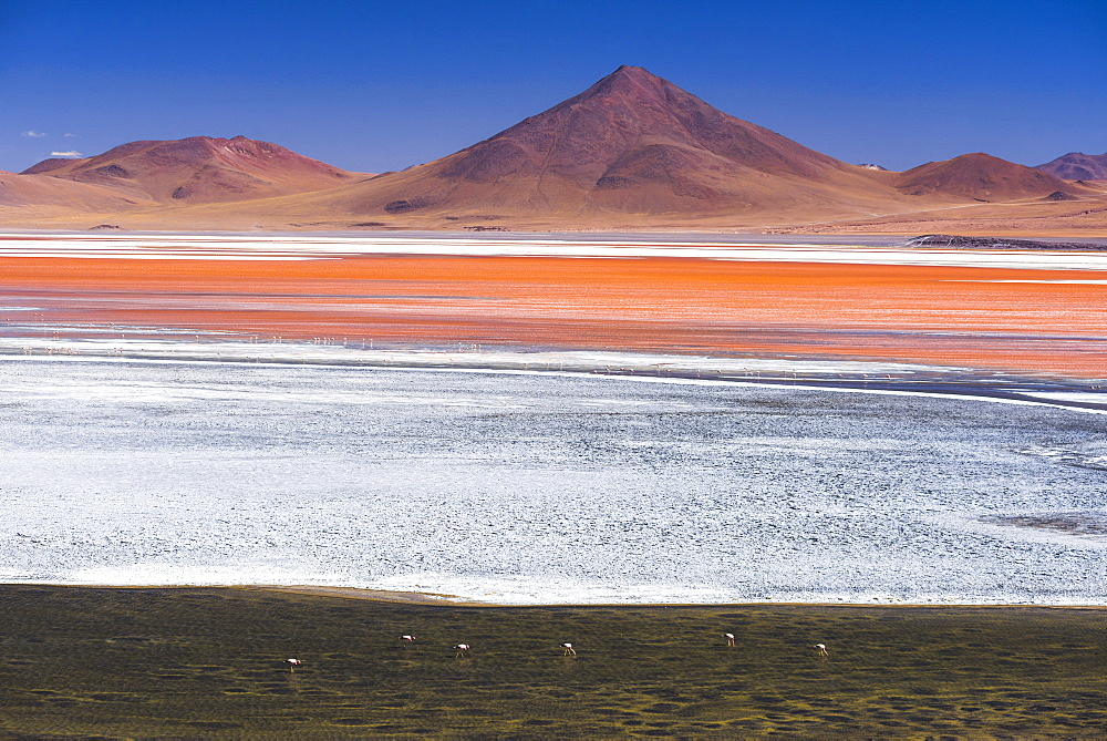 Flamingos at Red Lagoon (Laguna Colorada), a salt lake in the Altiplano of Bolivia in Eduardo Avaroa Andean Fauna National Reserve, Bolivia, South America