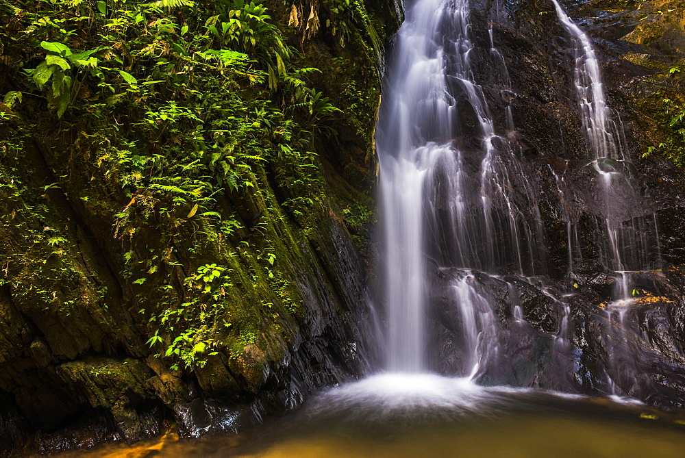 Cucharillos Waterfall in the Mashpi Cloud Forest area of the Choco Rainforest, Ecuador, South America