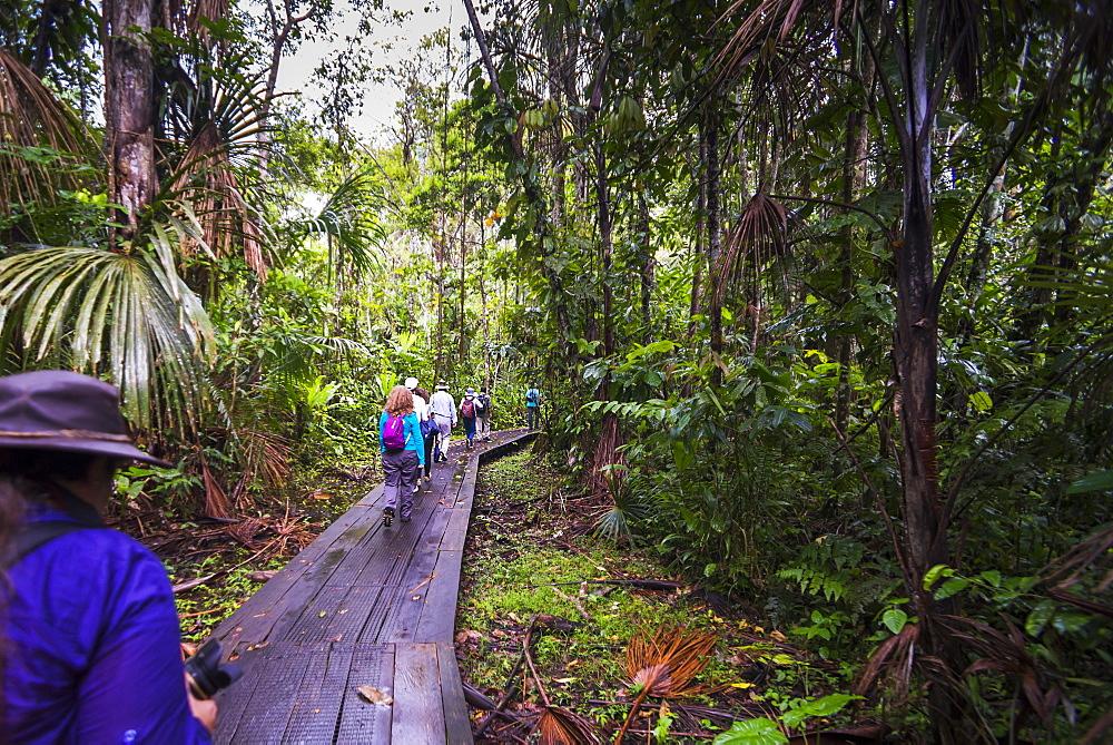 Walking in the Amazon Rainforest at Sacha Lodge, Coca, Ecuador, South America