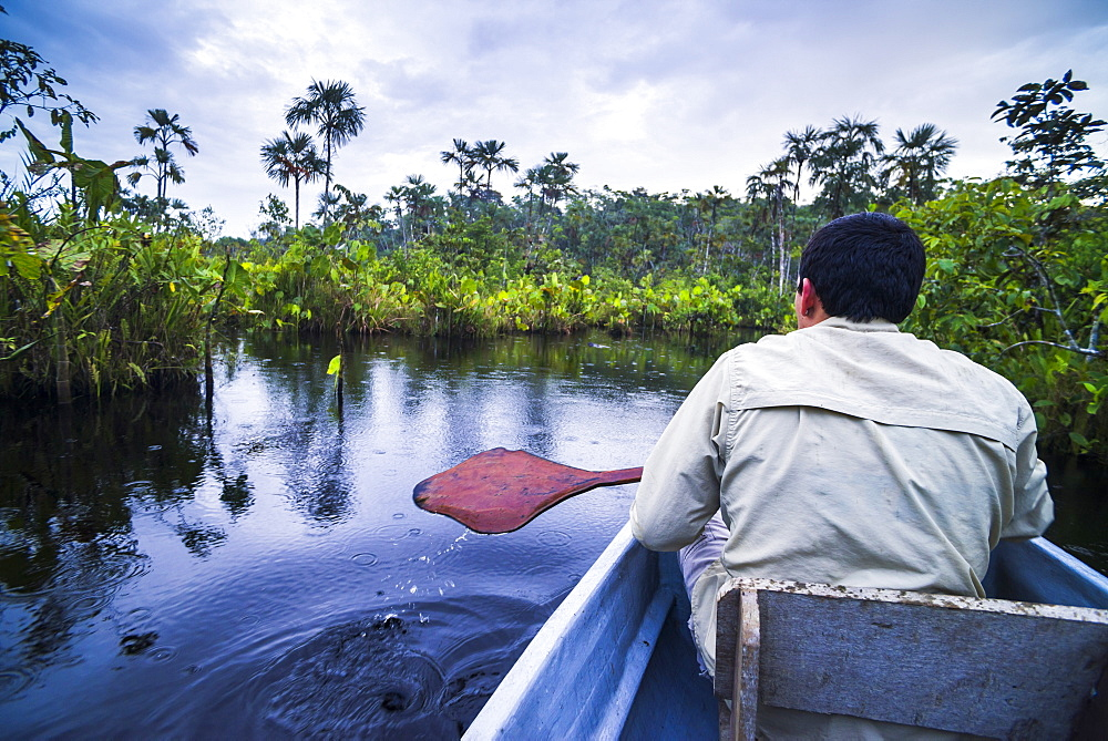 Dugout canoe boat ride in narrow waterway, Amazon Rainforest, Coca, Ecuador, South America