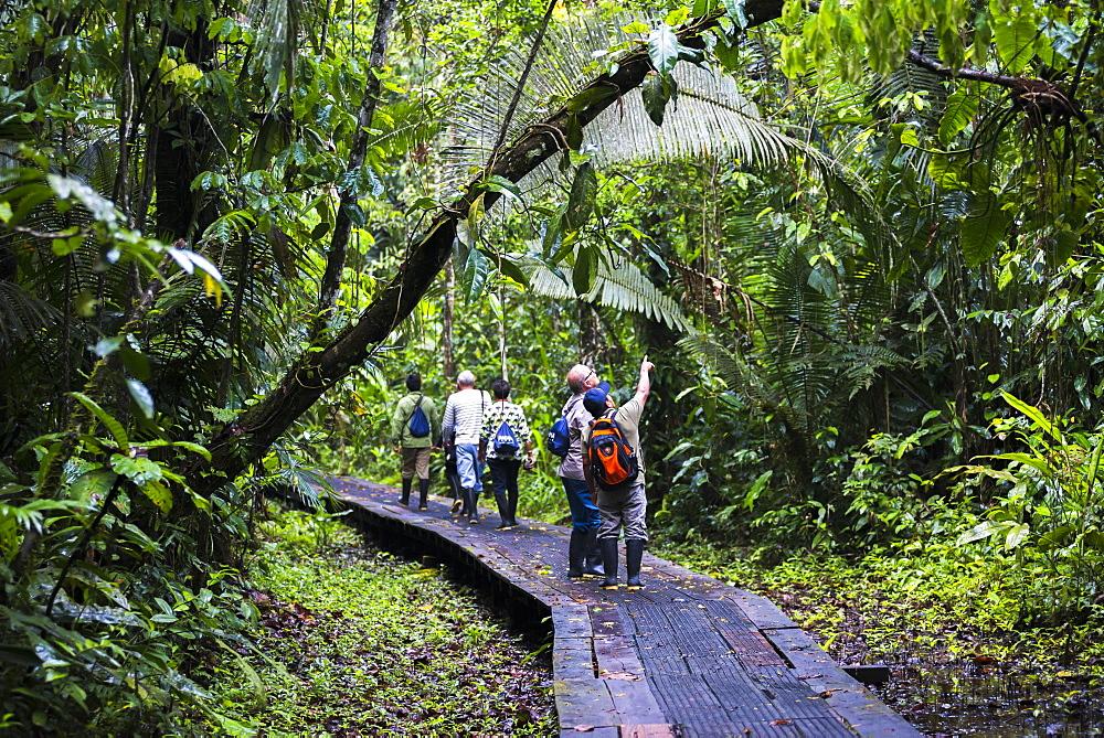 Amazon Jungle walkway at Sacha Lodge, Coca, Ecuador, South America - 1109-2193