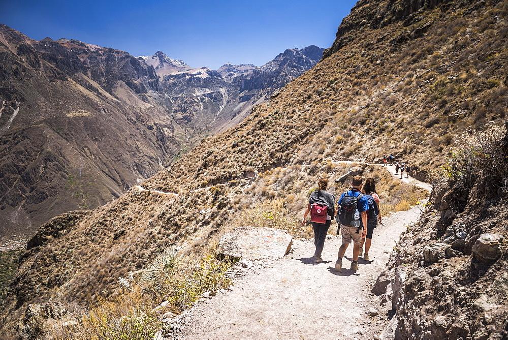 Tourist hiking the Colca Canyon trek, Peru, South America
