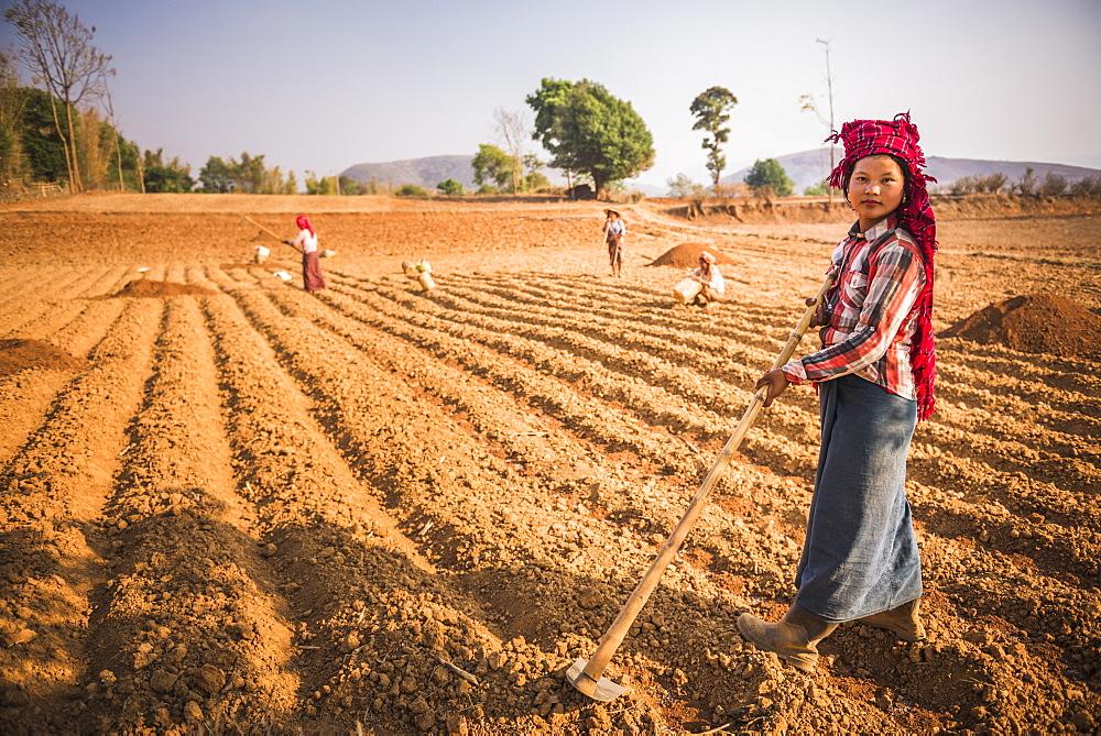 Pa-O hill tribe, farming near Inle Lake and Kalaw, Shan State, Myanmar (Burma), Asia