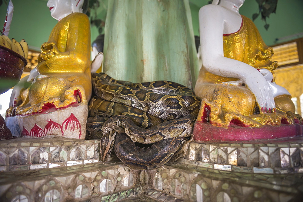 Snake Temple (Mwe Paya) between Dalah and Twante, across the river from Yangon, Myanmar (Burma), Asia