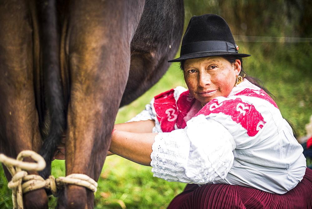 Portrait of an indigenous Cayambe lady milking her cows at Zuleta Farm, Imbabura, Ecuador, South America