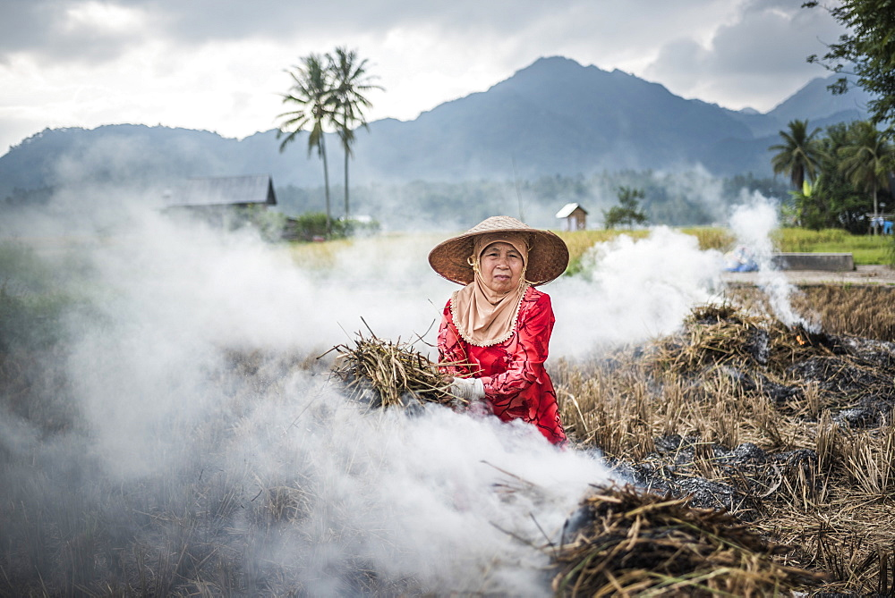 Farmer burning crops in rice paddy fields, Bukittinggi, West Sumatra, Indonesia, Southeast Asia, Asia - 1109-2686