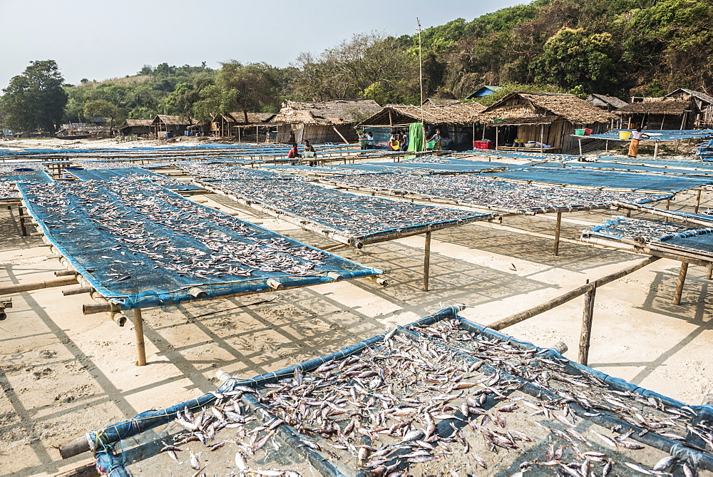 Fish drying in the fishing village at Tizit Beach, Dawei Peninsula, Tanintharyi Region, Myanmar (Burma), Asia