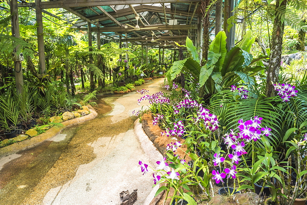 Orchid garden, Perdana Botanical Garden, Tun Abdul Razak Heritage Park, Kuala Lumpur, Malaysia, Southeast Asia, Asia