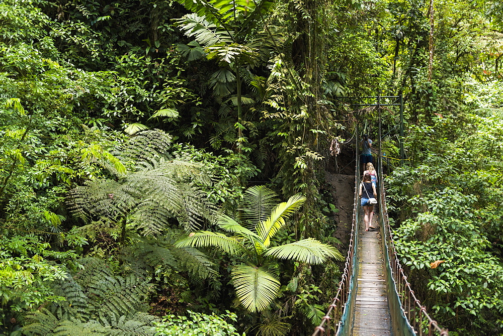 Rainforest on La Fortuna Waterfall hike, Alajuela Province, Costa Rica, Central America