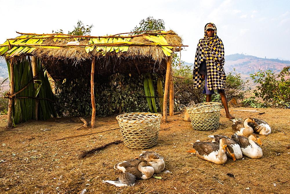 Man selling geese near Ranomafana, Haute Matsiatra Region, Madagascar, Africa