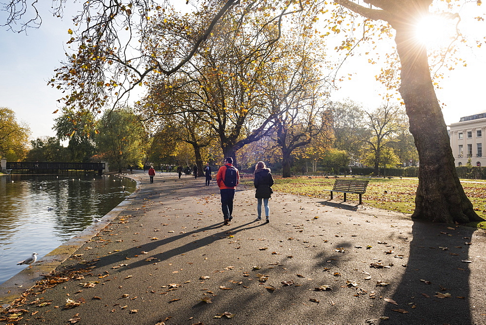 Autumn in Regents Park, one of the Royal Parks of London, England - 1109-3722