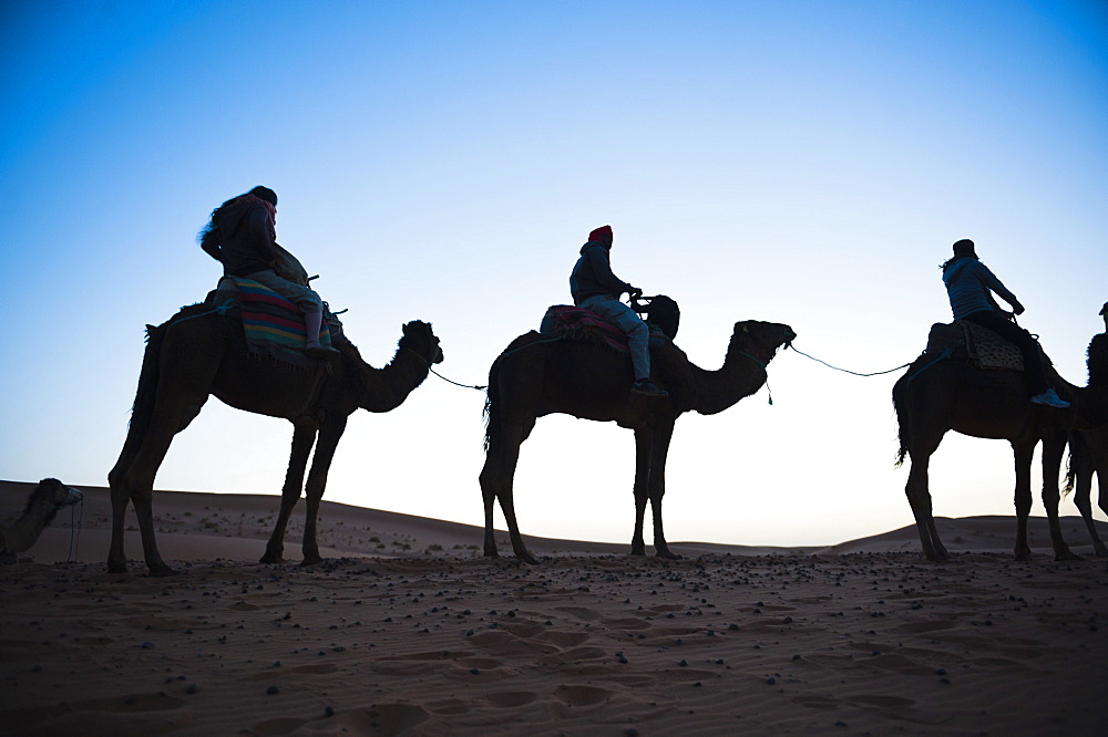 Tourists silhouetted on a camel ride at night, Erg Chebbi Desert, Sahara Desert near Merzouga, Morocco, North Africa, Africa