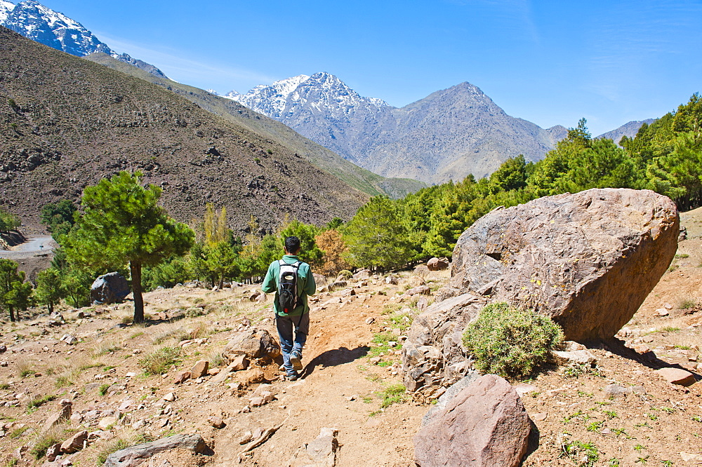 Tour guide trekking in the Imlil valley, on route from Tizi n Tamatert into Imlil, High Atlas Mountains, Morocco, North Africa, Africa