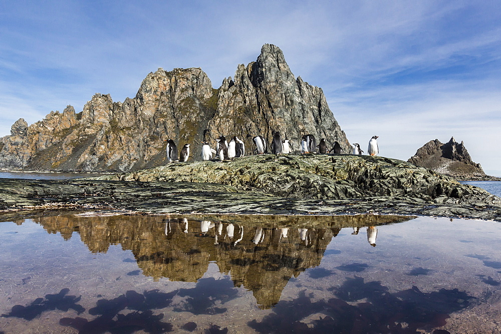 Adult gentoo penguins (Pygoscelis papua) and chinstrap penguins (Pygoscelis antarctica) reflected in tide pool, Elephant Island, Antarctica, Southern Ocean, Polar Regions
