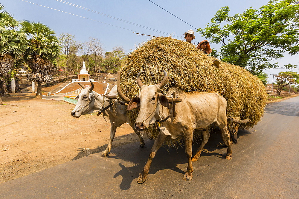 Ox drawn cart near Wat (Phnom) Hanchey, on the Mekong River, Kampong Cham Province, Cambodia, Indochina, Southeast Asia, Asia