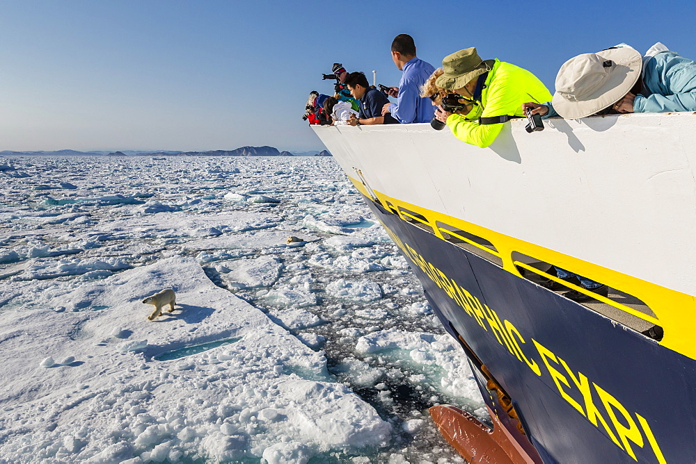 Guests from the Lindblad Expeditions ship National Geographic Explorer with polar bear (Ursus maritimus), Cumberland Peninsula, Baffin Island, Nunavut, Canada, North America