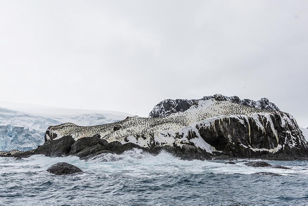 Chinstrap breeding colony at Point Wild, Elephant Island, South Shetland Islands, Antarctica, Polar Regions