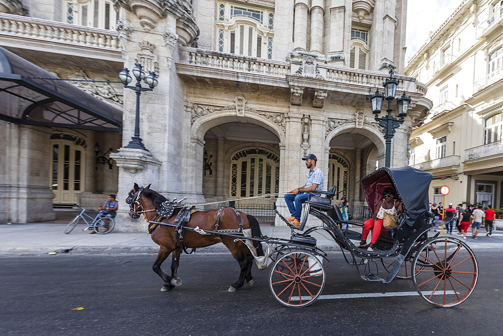 Horse-drawn carts known locally as coches for hire in Havana, Cuba, West Indies, Central America