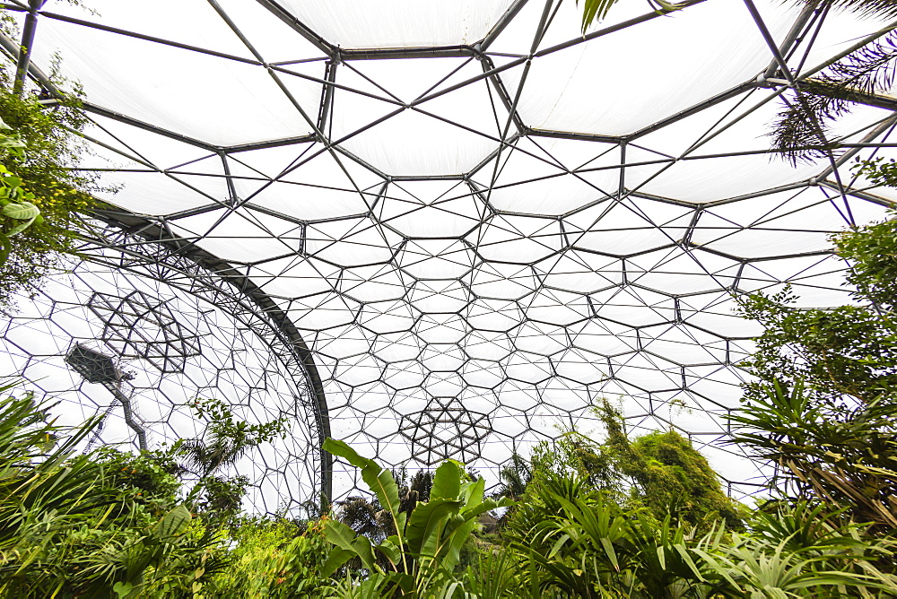 Inside the tropical biome at the popular visitor attraction, The Eden Project, St. Blazey, near St. Austell, Cornwall, England, United Kingdom, Europe