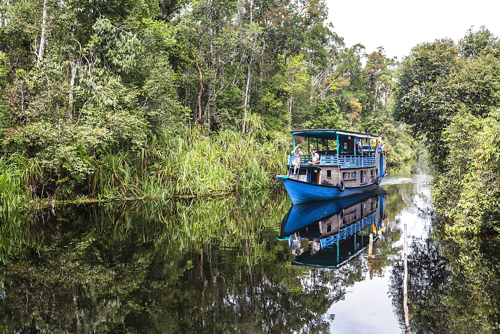 Klotok with tourists on the Sekonyer River, Tanjung Puting National Park, Borneo, Indonesia. - 1112-3676