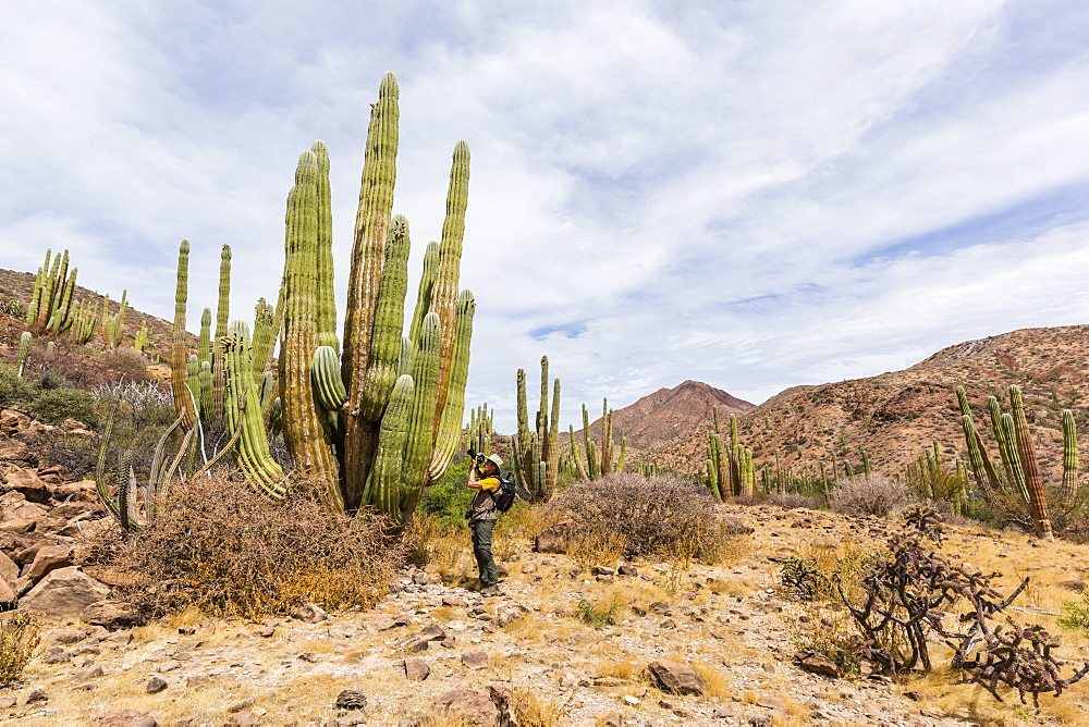 Photographer with Mexican giant cardon, Pachycereus pringlei, Isla San Esteban, Baja California, Mexico. - 1112-3729