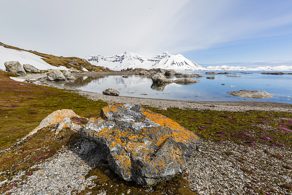 Elegant lichens cover the rocks at Gnalodden, Hornsund, Spitsbergen, Svalbard, Arctic, Norway, Europe