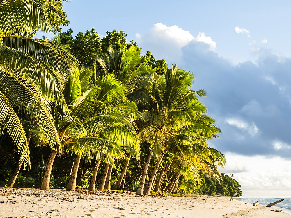 Coconut trees line the beach on the Island of Alofi, French Territory of Wallis and Futuna Islands, South Pacific Islands, Pacific