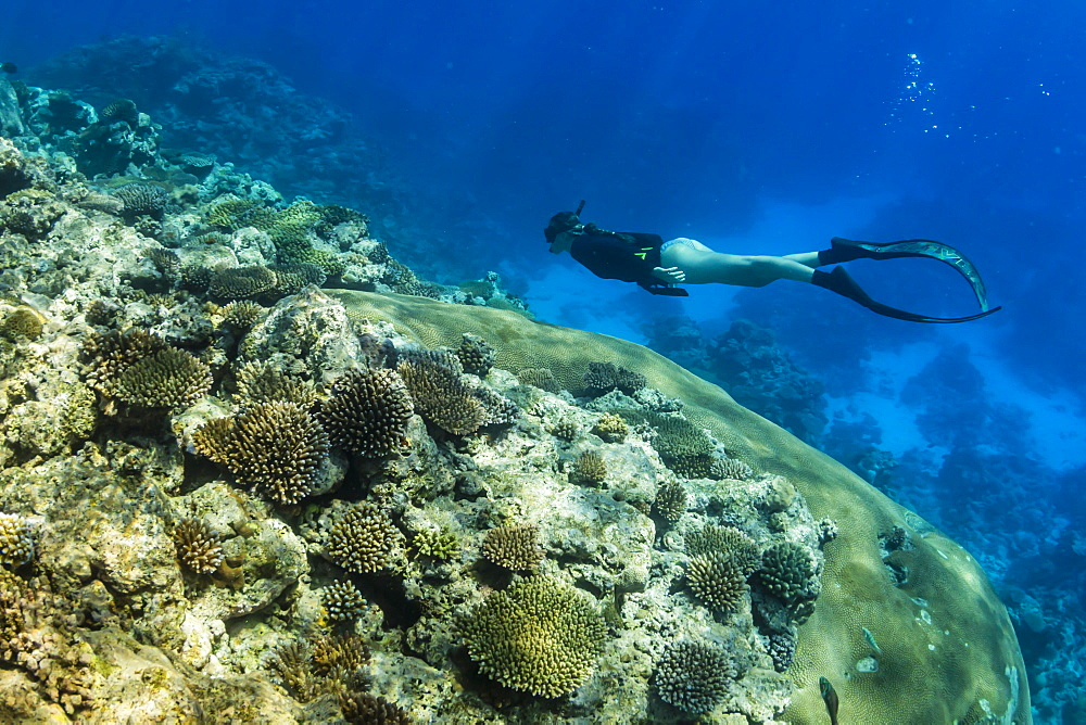 Snorkeling the pristine reefs on the remote Island of Alofi in The French Territory of Wallis and Futuna Islands. - 1112-3897