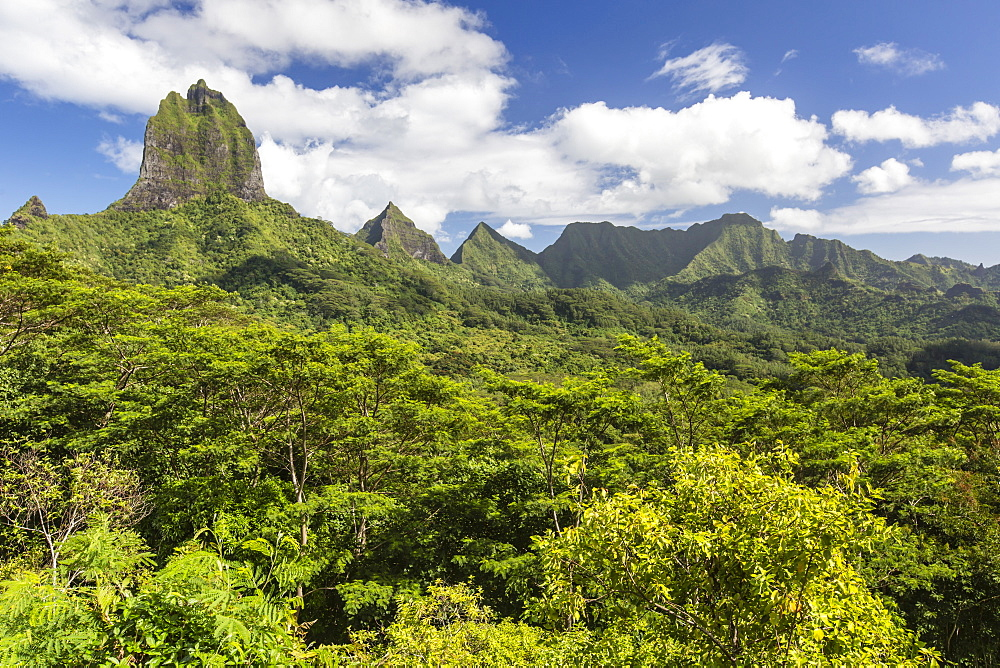 View of the rugged mountains surrounding Opunohu Valley from the Belvedere Overlook, Moorea, French Polynesia. - 1112-3965
