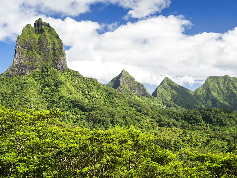 View of the rugged mountains surrounding Opunohu Valley from the Belvedere Overlook, Moorea, French Polynesia. - 1112-3966