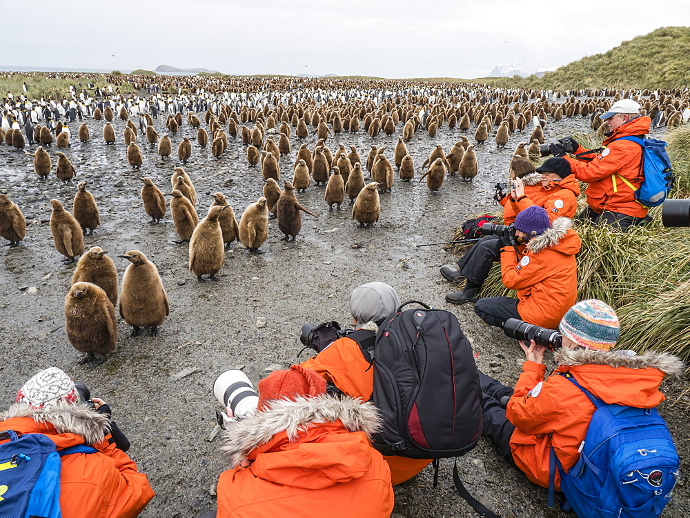 Tourists photographing king penguin chicks at Salisbury Plain, South Georgia Island, Antarctica - 1112-4126