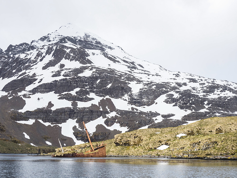 The abandoned remains of the whaling ship Brutus in Prince Olav Harbour, Cook Bay, South Georgia Island. - 1112-4151