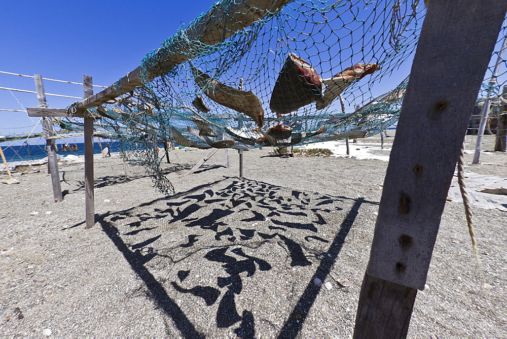 Shark fins drying in the sun, Gulf of California (Sea of Cortez), Baja California Sur, Mexico, North America
