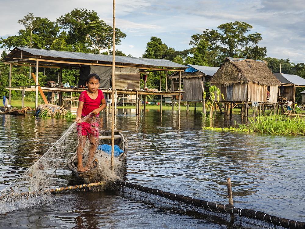 A young girl gathering catfish from the family fishing pen on Río El Dorado, Amazon Basin, Loreto, Peru.