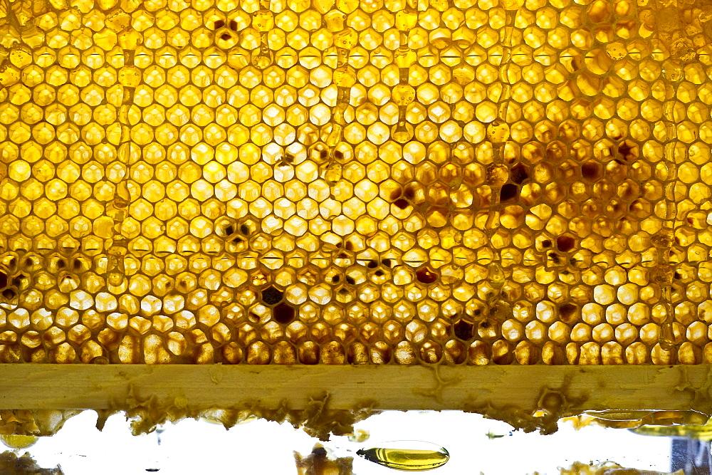 Honeycombs, Freiburg im Breisgau, Black Forest, Baden-Wuerttemberg, Germany