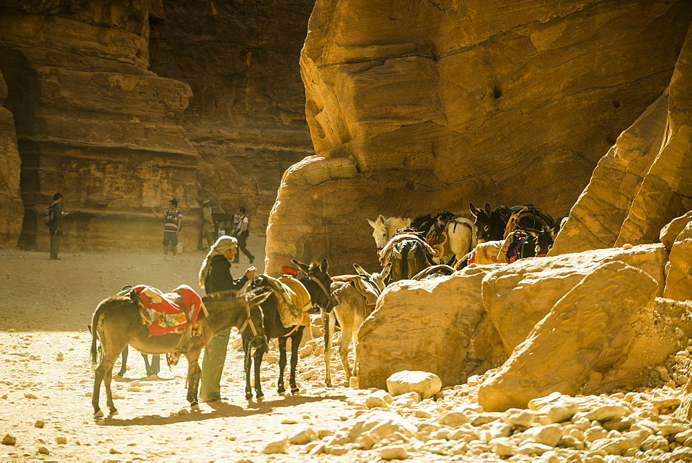 Donkeys and horses in The Siq, Petra, Jordan, Middle East