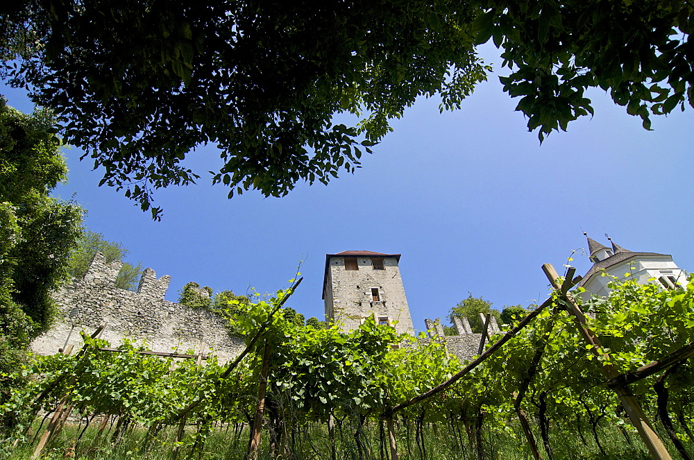 Walls of the fortress of Branzoli above Chiusa Klausen and vines, Val di´Isarco, Dolomite Alps, South Tyrol, Upper Adige, Italy