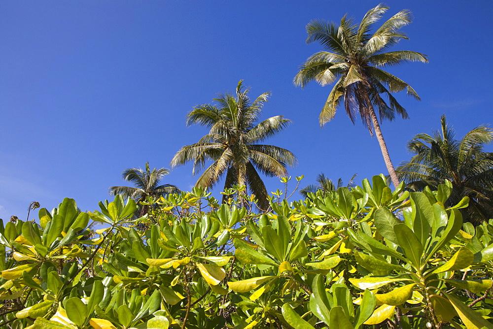 Palm trees on the beach, Bang Saphan, Prachuap Khiri Khan Province, Thailand, Asia