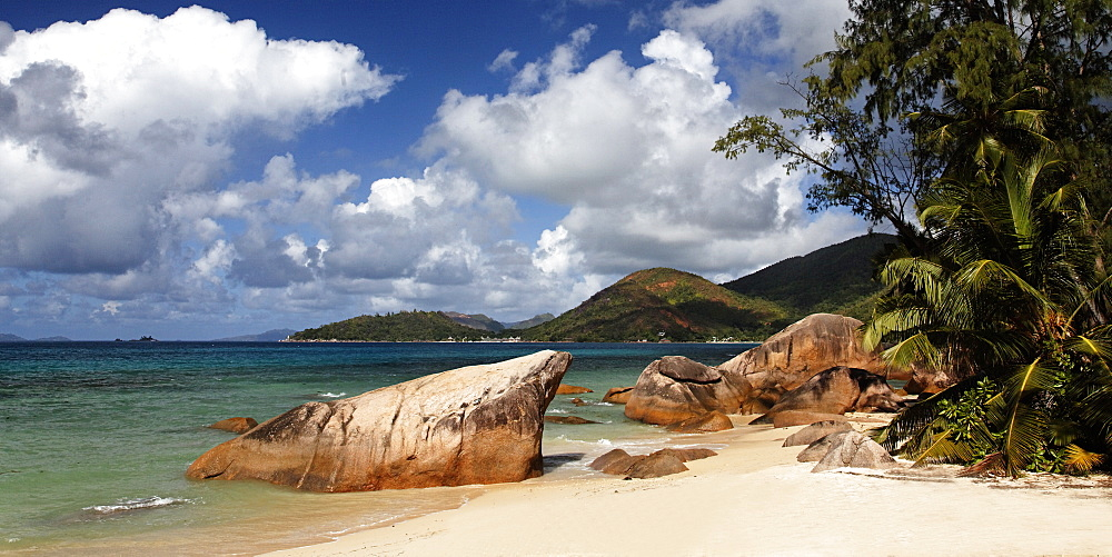 Tropical beach with palm tree, Anse Boudin, Praslin, Seychelles, Indian ocean