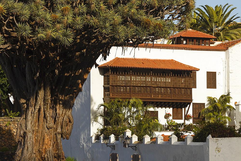 Drago Milenario, Thousand-Year-Old Dragon tree, ancient dragon tree, UNESCO World Heritage Site, Icod de los Vinos, Tenerife, Canary Islands, Spain, Europe