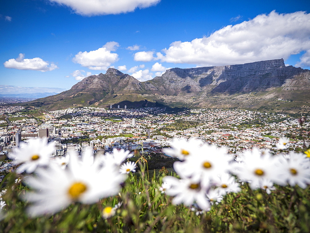 View from Signal Hill over Cape Town to Table Mountain, Western Cape, South Africa